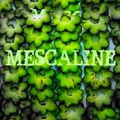 Mescaline/Peyote/San Pedro