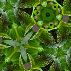 Salvia Divinorum/Salvinorin A